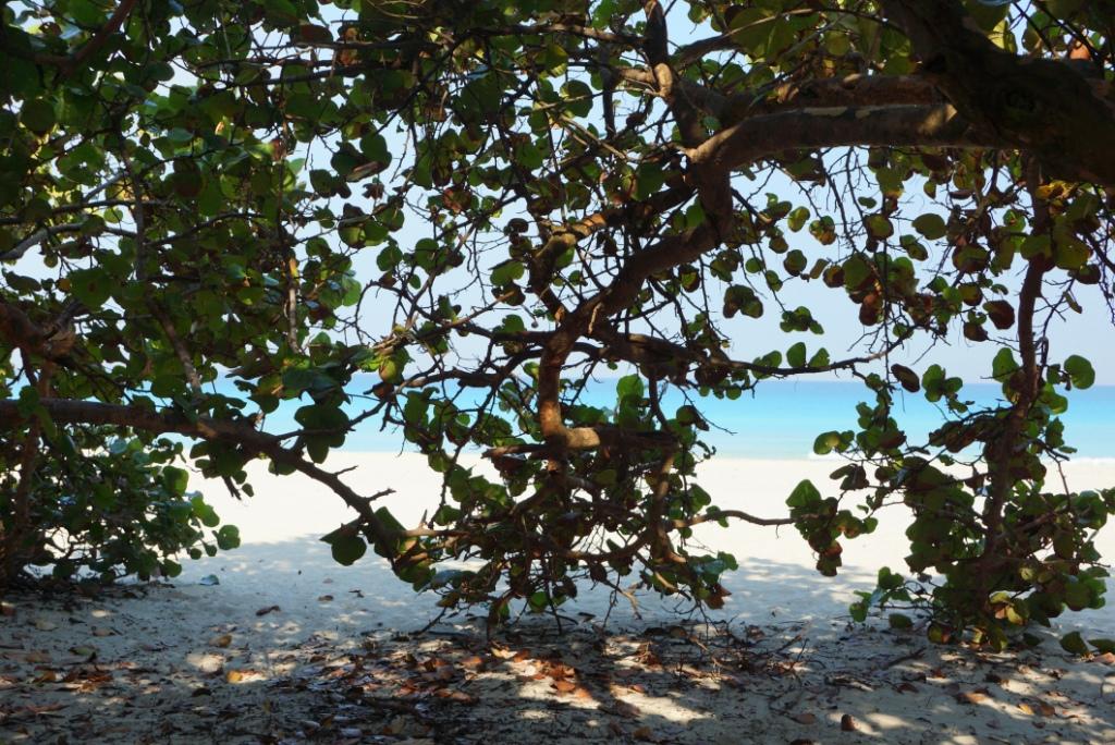 θέα ανάμεσα στα δέντρα στην παραλία Βαραδέρο
